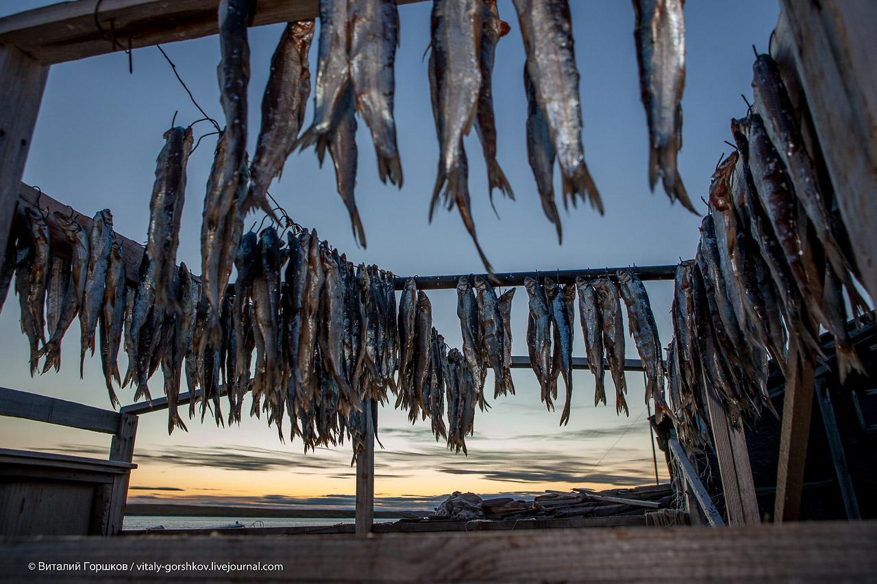заготовка рыбы